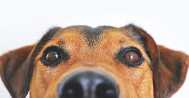 Nahaufnahme Hund mit Hundehaftpflicht