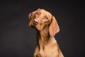 Portrait Hund mit Hundehaftpflichtversicherung