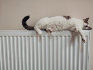 Katze schläft auf Heizungskörper nach Gasvergleich